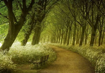 Non woven wallpaper Green forest - patch